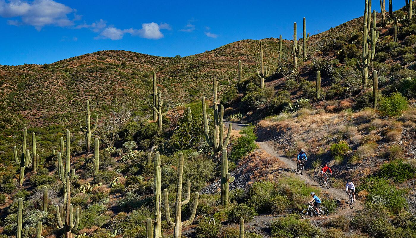 Growing cactus